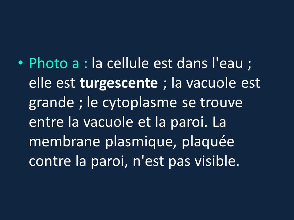 Photo a : la cellule est dans l eau ; elle est turgescente ; la vacuole est grande ; le cytoplasme se trouve entre la vacuole et la paroi.