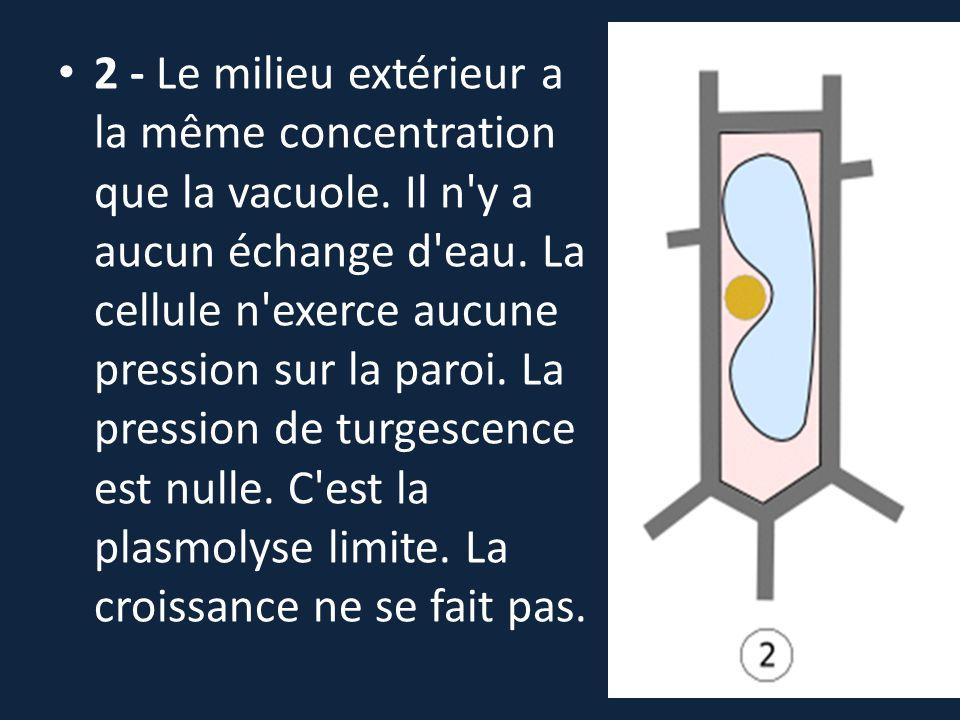 2 - Le milieu extérieur a la même concentration que la vacuole
