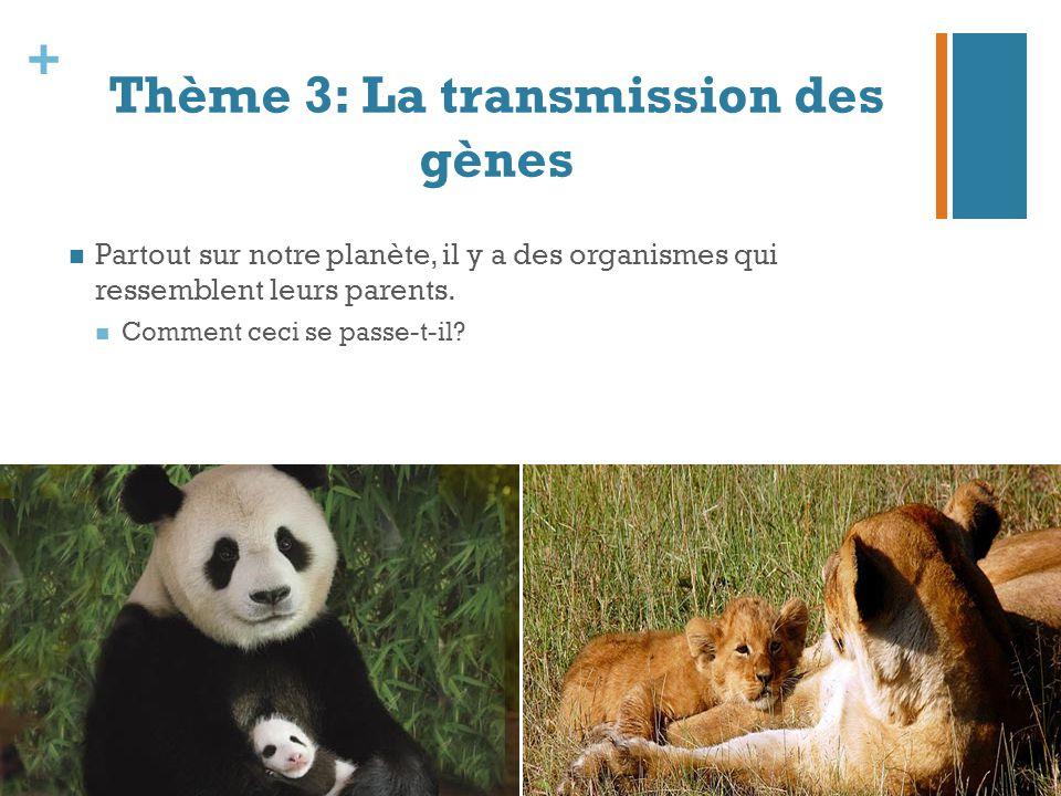Thème 3: La transmission des gènes