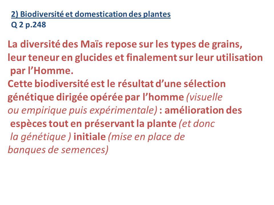 La diversité des Maïs repose sur les types de grains,