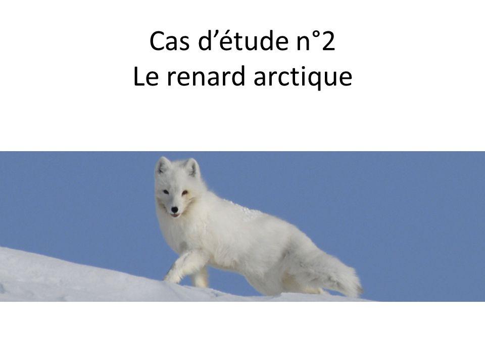 Cas d'étude n°2 Le renard arctique