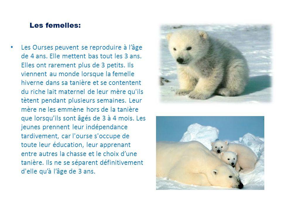 Les femelles: