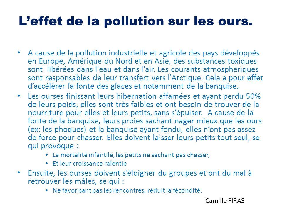 L'effet de la pollution sur les ours.