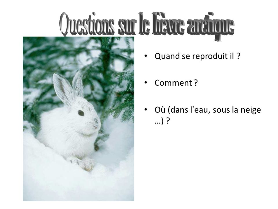Questions sur le lièvre arctique