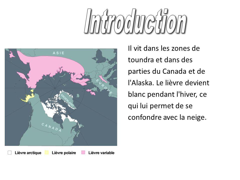Introduction Il vit dans les zones de toundra et dans des