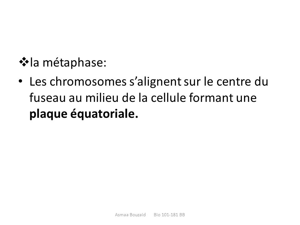 la métaphase: Les chromosomes s'alignent sur le centre du fuseau au milieu de la cellule formant une plaque équatoriale.