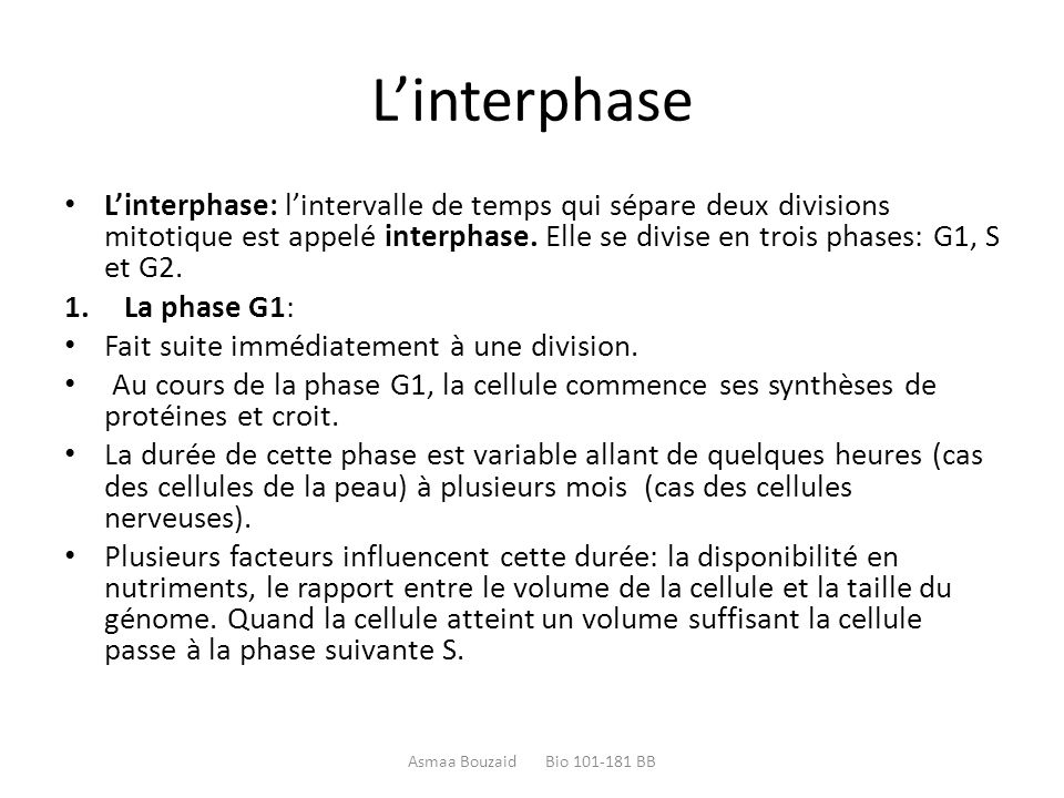 L'interphase