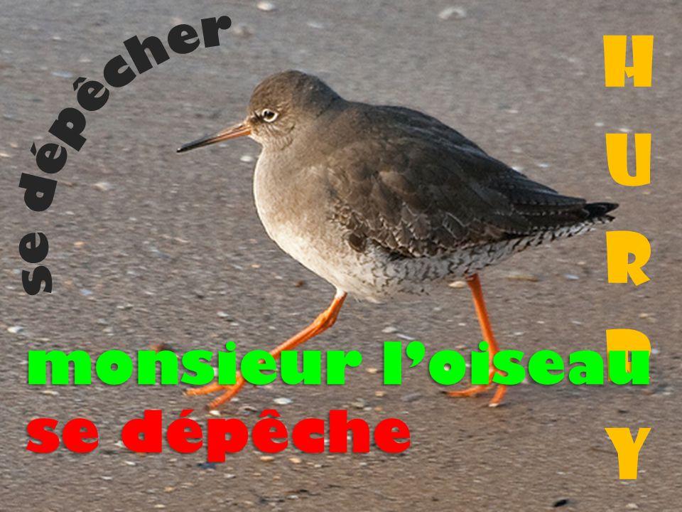 hurry se dépêcher monsieur l'oiseau se dépêche