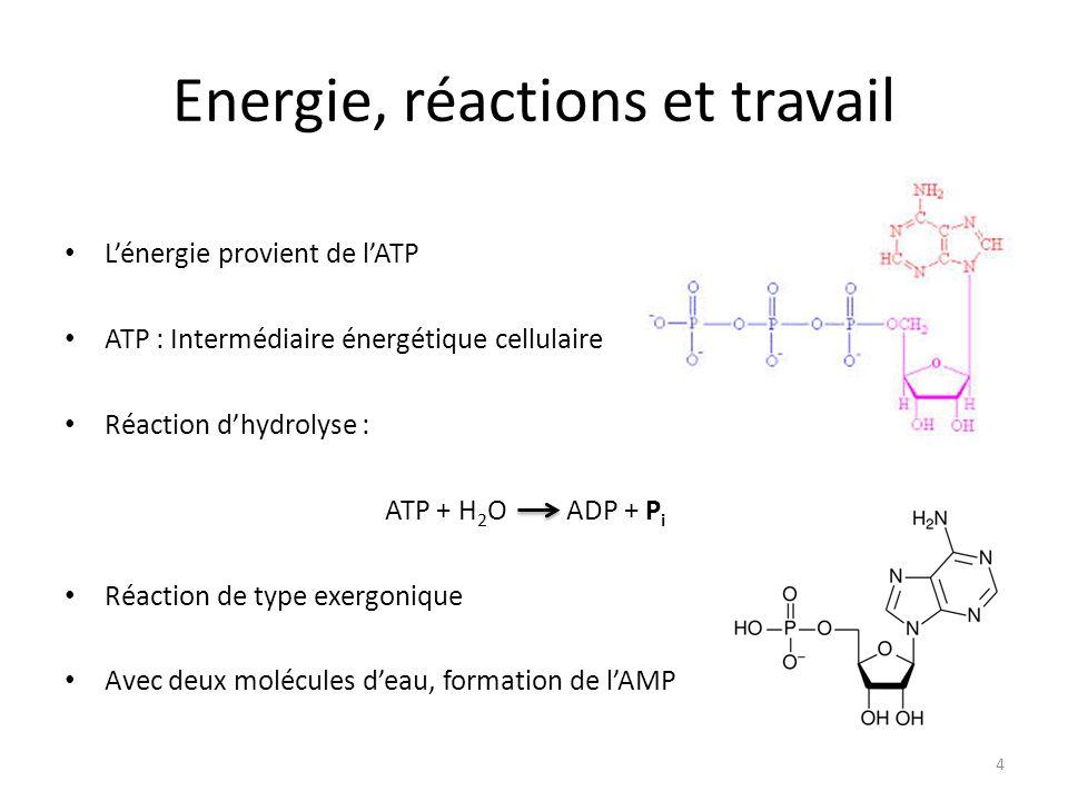 Energie, réactions et travail