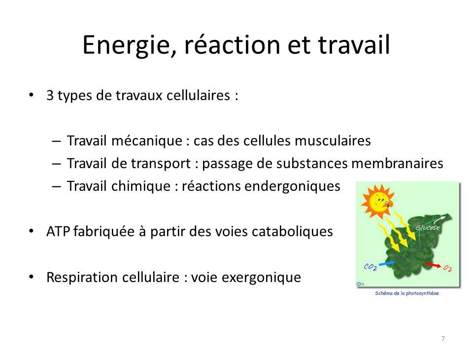 Energie, réaction et travail