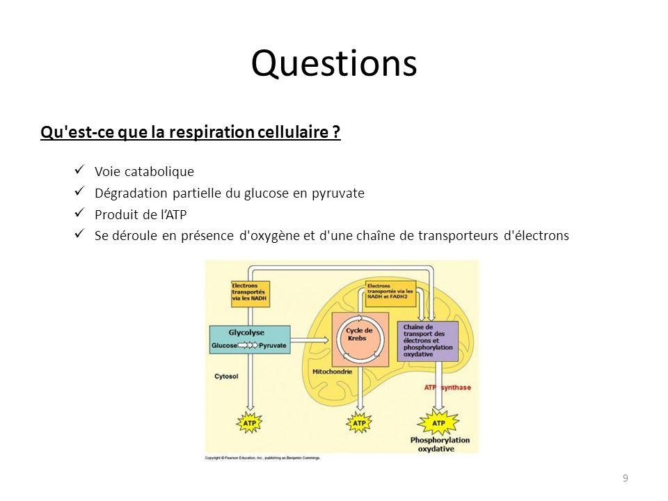 Questions Qu est-ce que la respiration cellulaire Voie catabolique