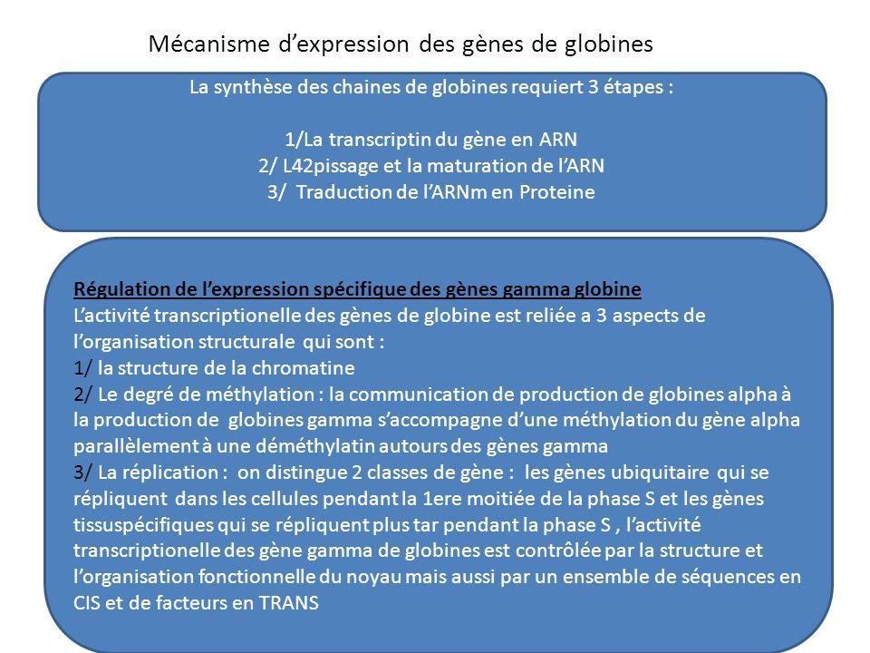 Mécanisme d'expression des gènes de globines