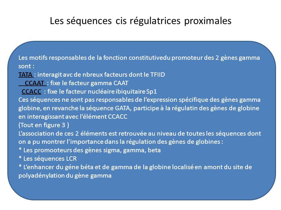 Les séquences cis régulatrices proximales