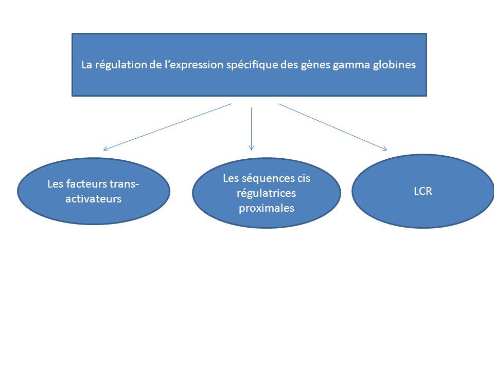 La régulation de l'expression spécifique des gènes gamma globines
