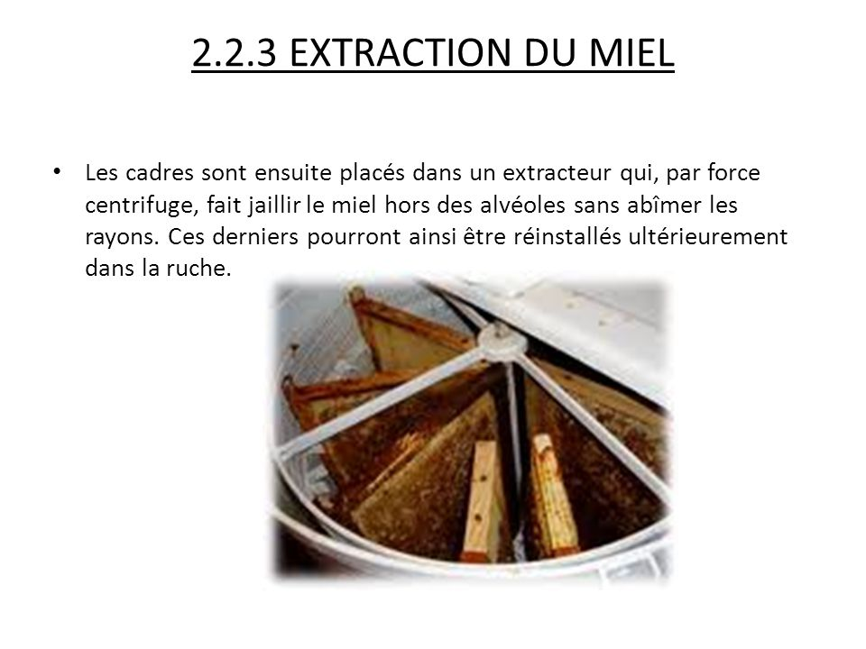 2.2.3 EXTRACTION DU MIEL