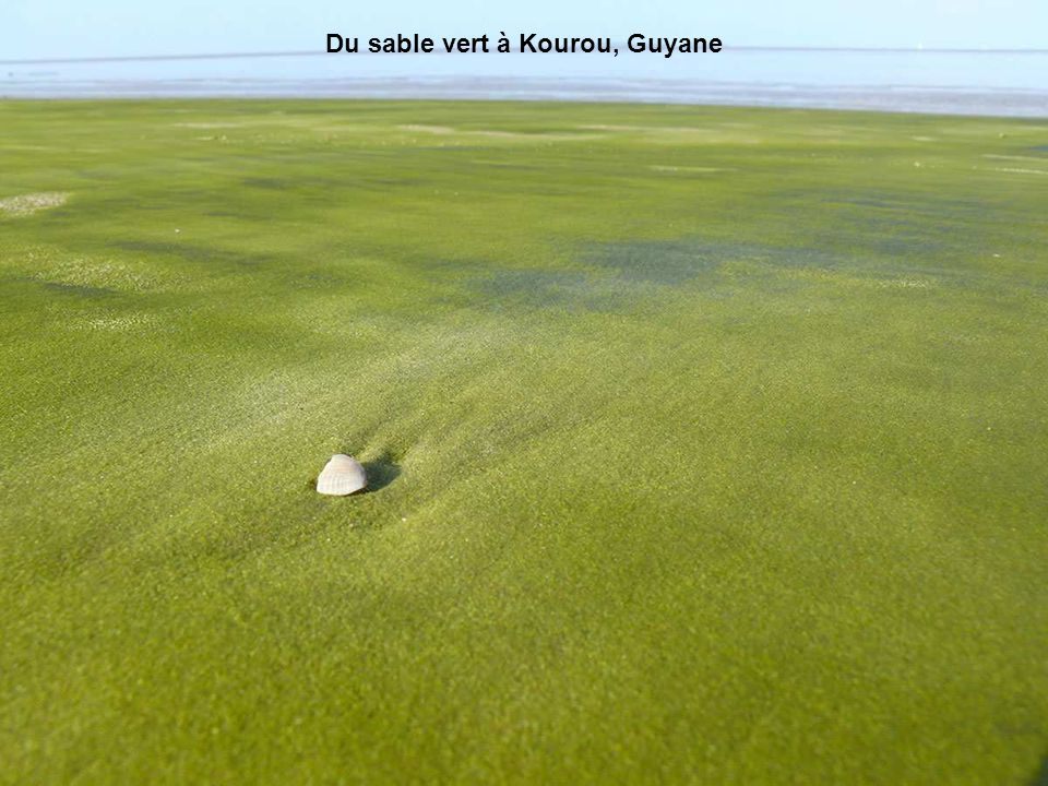 Du sable vert à Kourou, Guyane