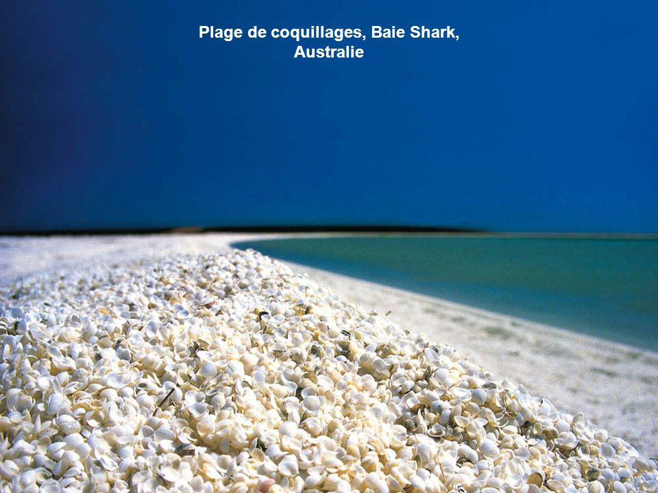 Plage de coquillages, Baie Shark, Australie