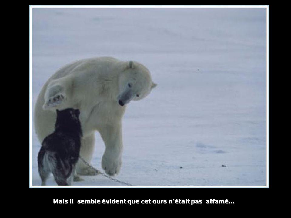 Mais il semble évident que cet ours n était pas affamé…