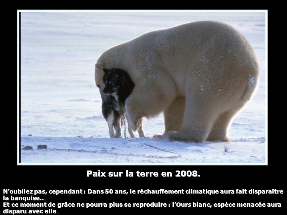 Paix sur la terre en 2008. N'oubliez pas, cependant : Dans 50 ans, le réchauffement climatique aura fait disparaître la banquise..