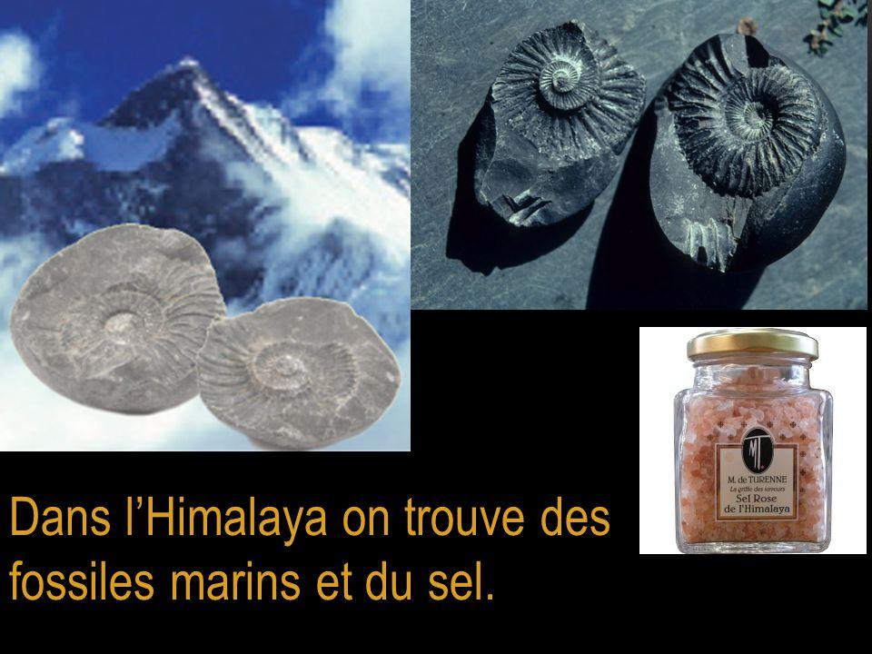 Dans l'Himalaya on trouve des fossiles marins et du sel.