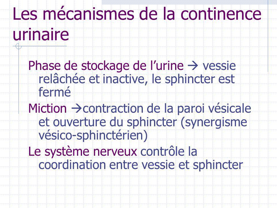 Les mécanismes de la continence urinaire