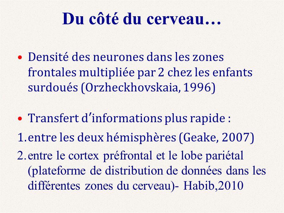 Du côté du cerveau… Densité des neurones dans les zones frontales multipliée par 2 chez les enfants surdoués (Orzheckhovskaia, 1996)