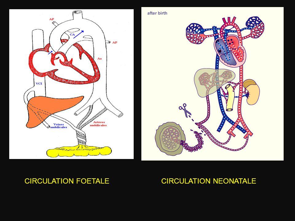 CIRCULATION FOETALE CIRCULATION NEONATALE
