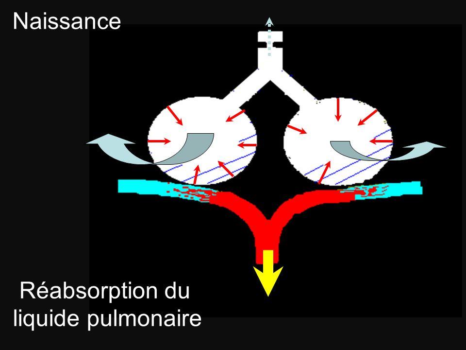 Naissance Réabsorption du liquide pulmonaire