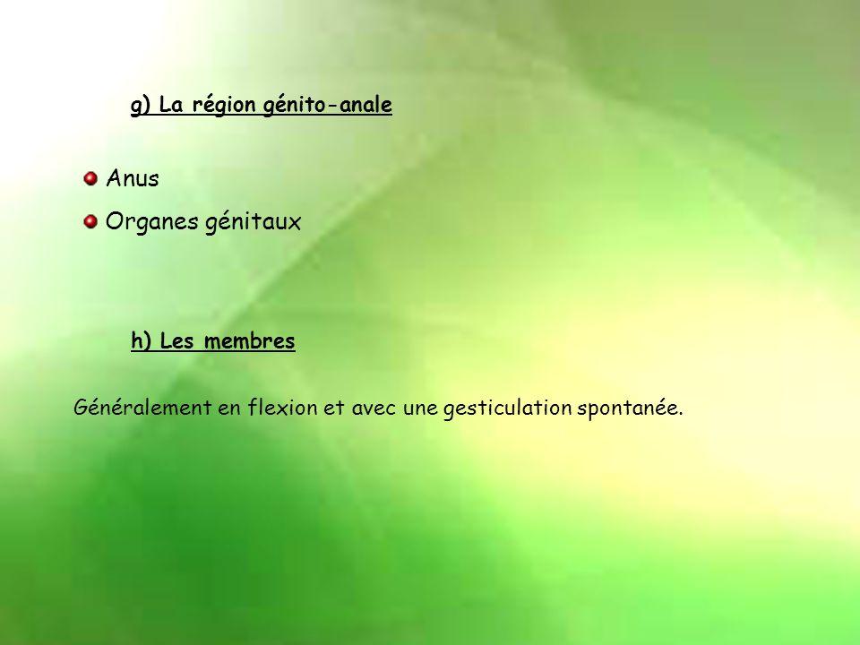 Anus Organes génitaux g) La région génito-anale h) Les membres