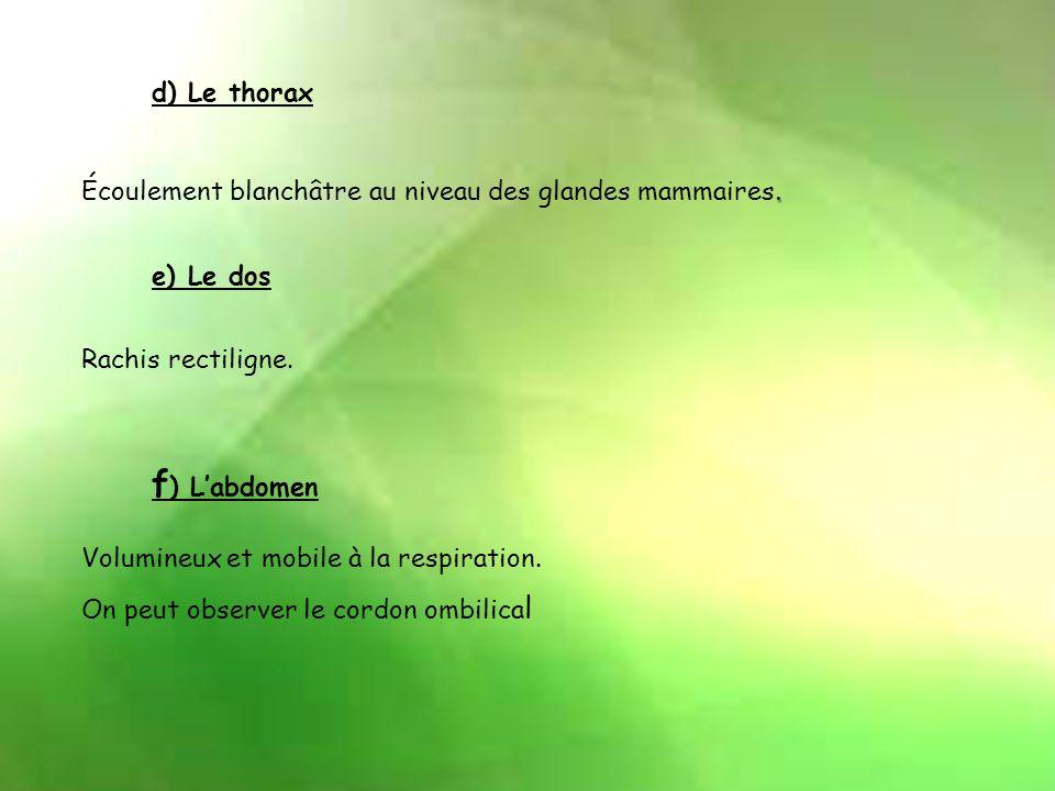 f) L'abdomen d) Le thorax