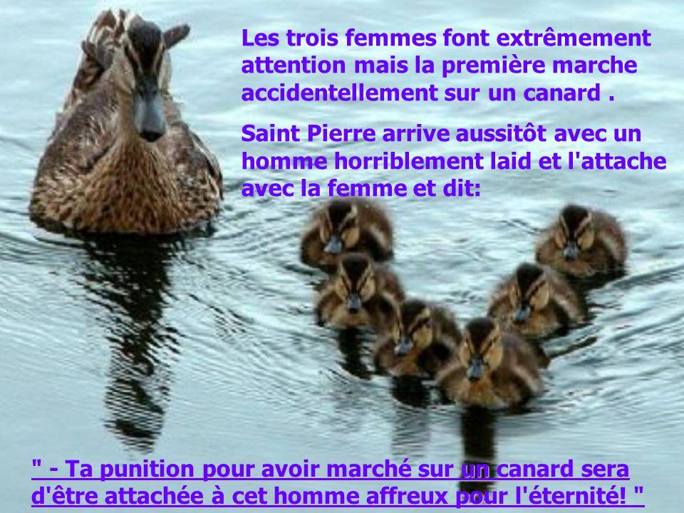 Les trois femmes font extrêmement attention mais la première marche accidentellement sur un canard .