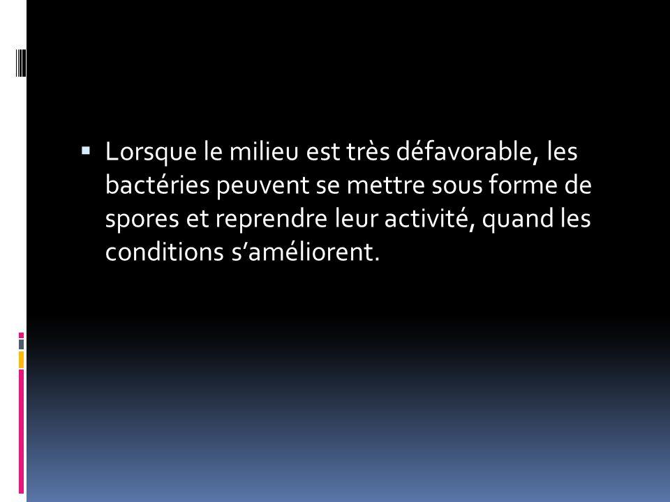 Lorsque le milieu est très défavorable, les bactéries peuvent se mettre sous forme de spores et reprendre leur activité, quand les conditions s'améliorent.