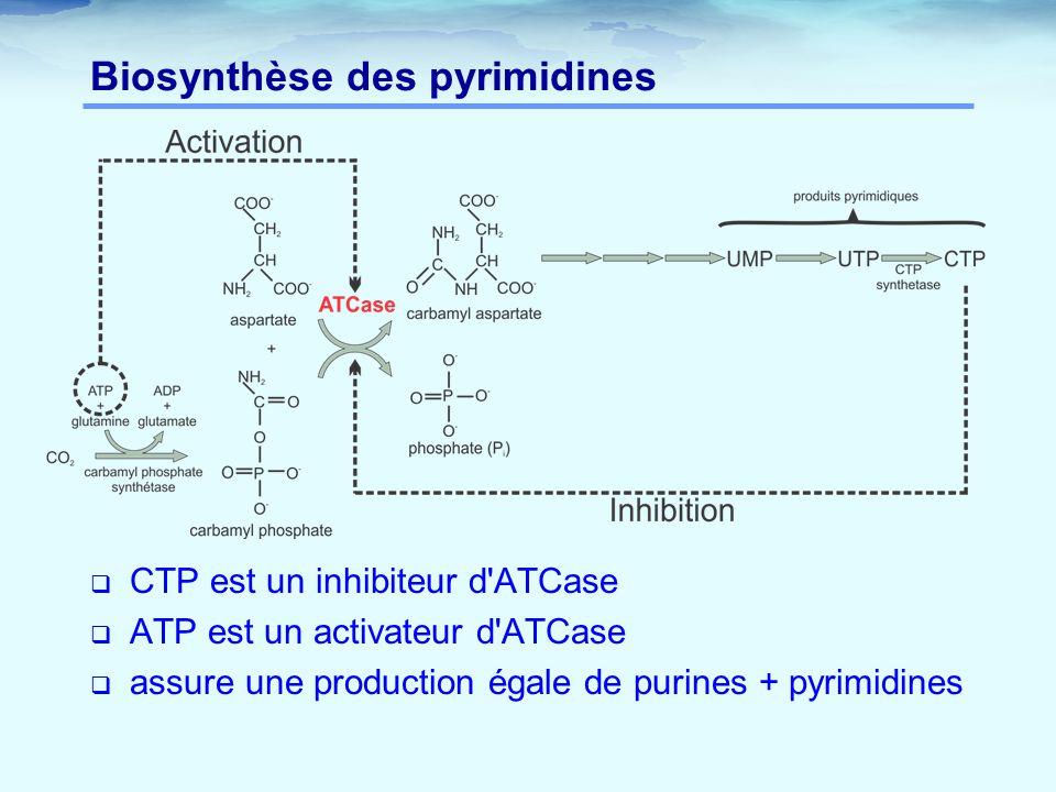 Biosynthèse des pyrimidines