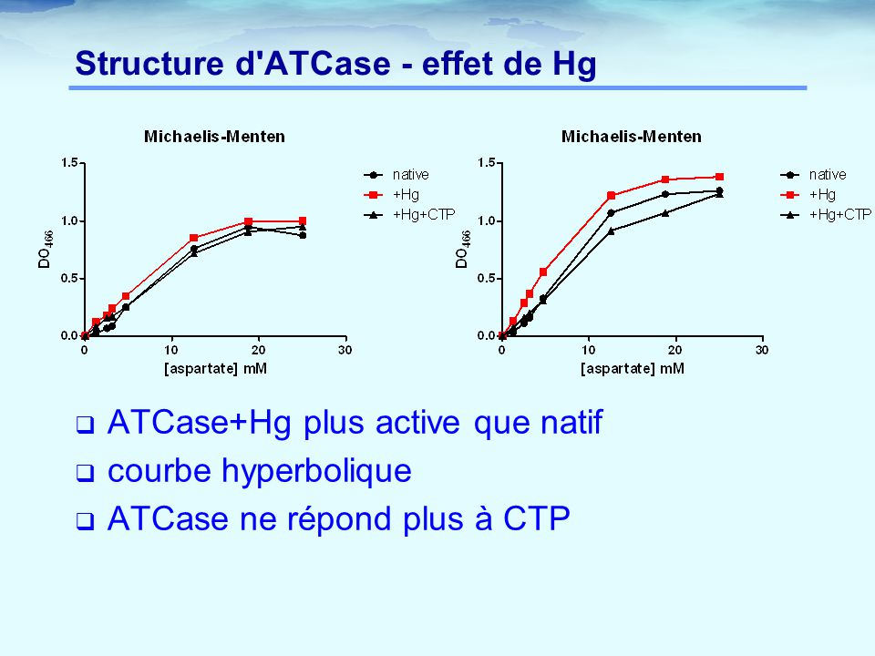 Structure d ATCase - effet de Hg