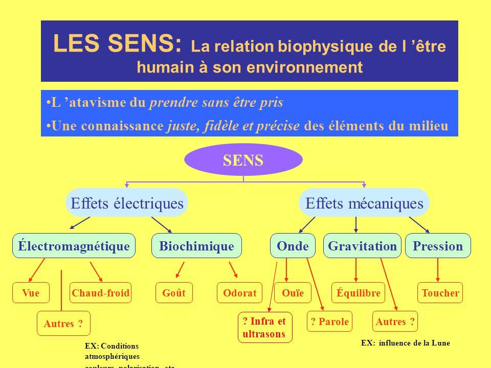 LES SENS: La relation biophysique de l 'être humain à son environnement