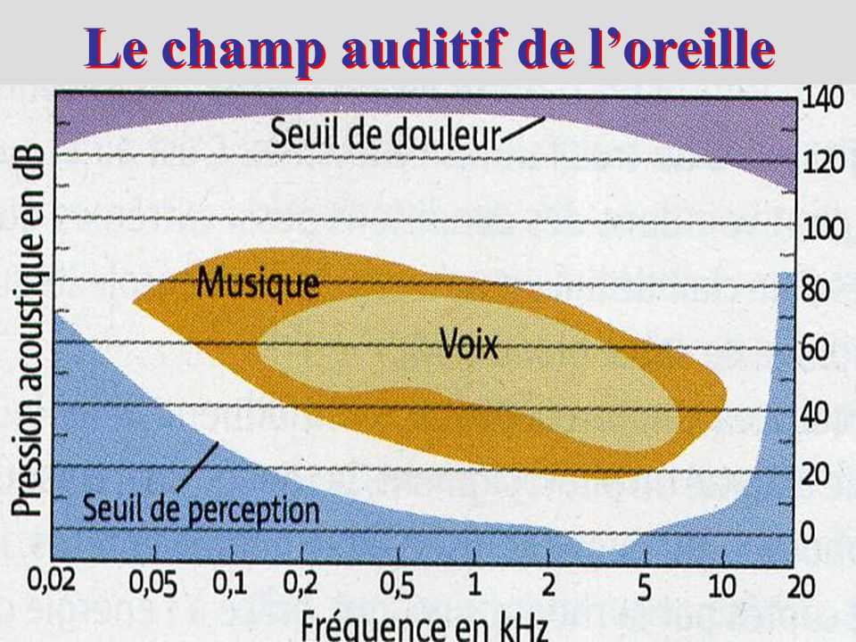 Le champ auditif de l'oreille