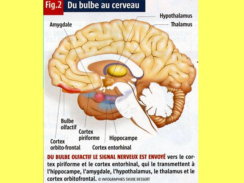 La Recherche, janv. 2006, p.92