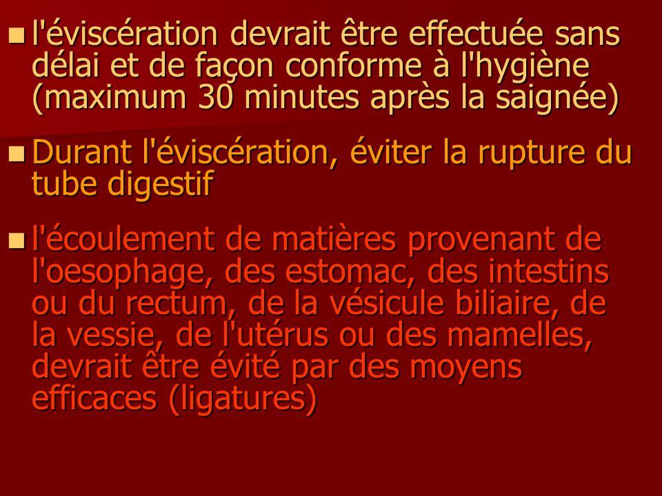 l éviscération devrait être effectuée sans délai et de façon conforme à l hygiène (maximum 30 minutes après la saignée)