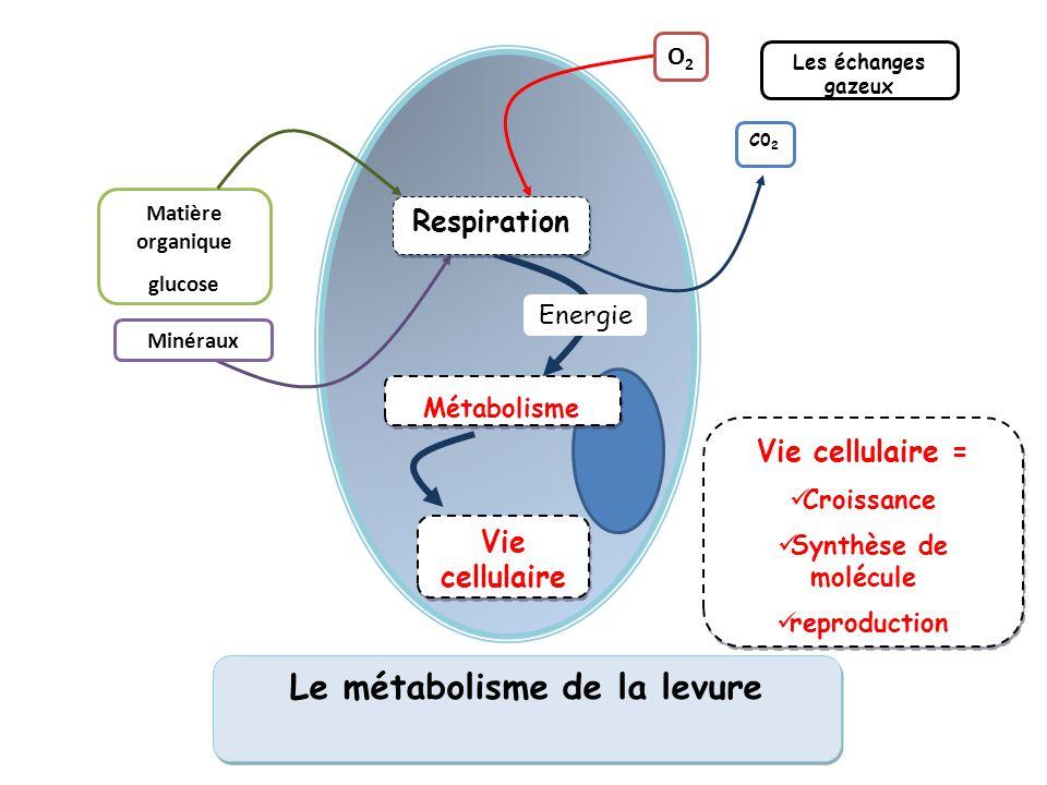 Le métabolisme chez la levure 2nde SVT