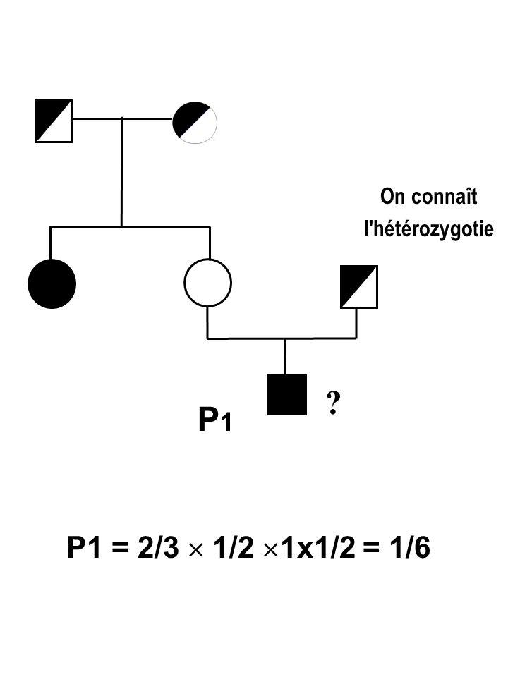 On connaît l hétérozygotie P1 P1 = 2/3  1/2 1x1/2 = 1/6