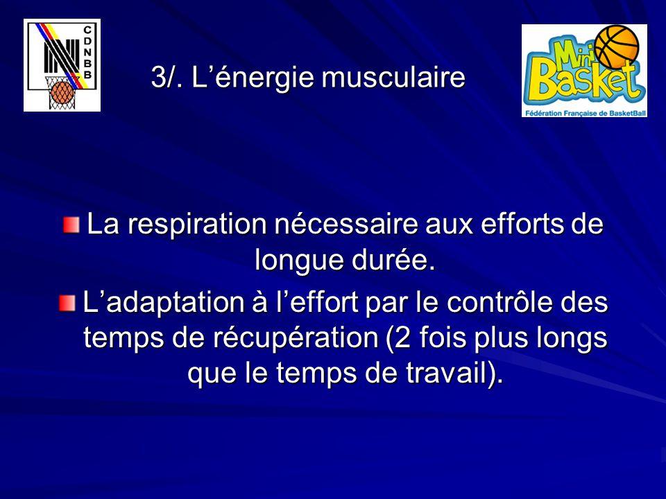 3/. L'énergie musculaire