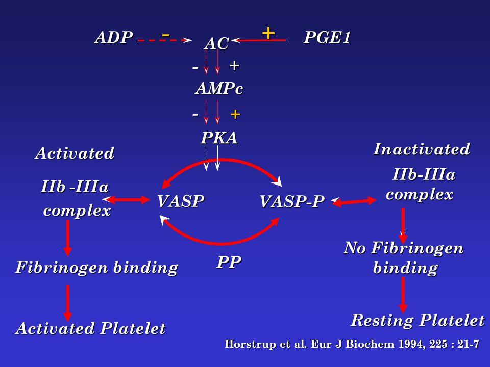 - + ADP PGE1 AC - + AMPc - + PKA Inactivated Activated IIb-IIIa