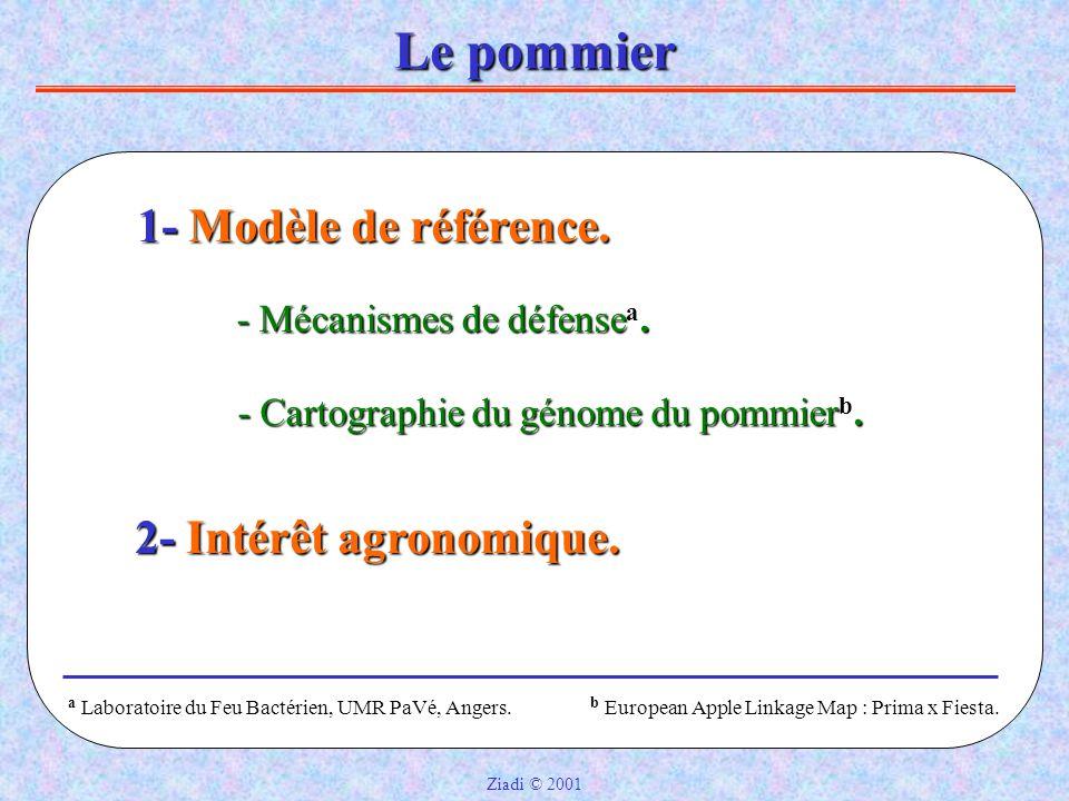Le pommier 1- Modèle de référence. 2- Intérêt agronomique.