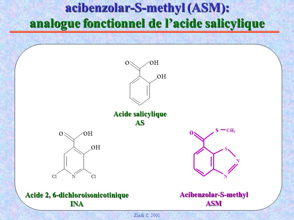 Acibenzolar-S-methyl Acide 2, 6-dichloroisonicotinique