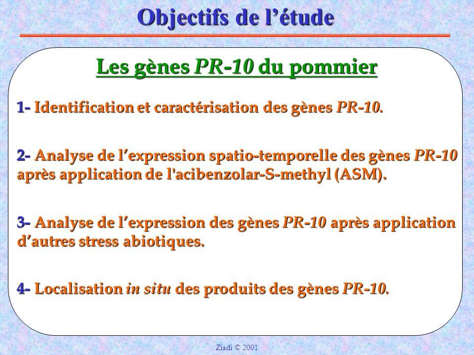 Objectifs de l'étude Les gènes PR-10 du pommier