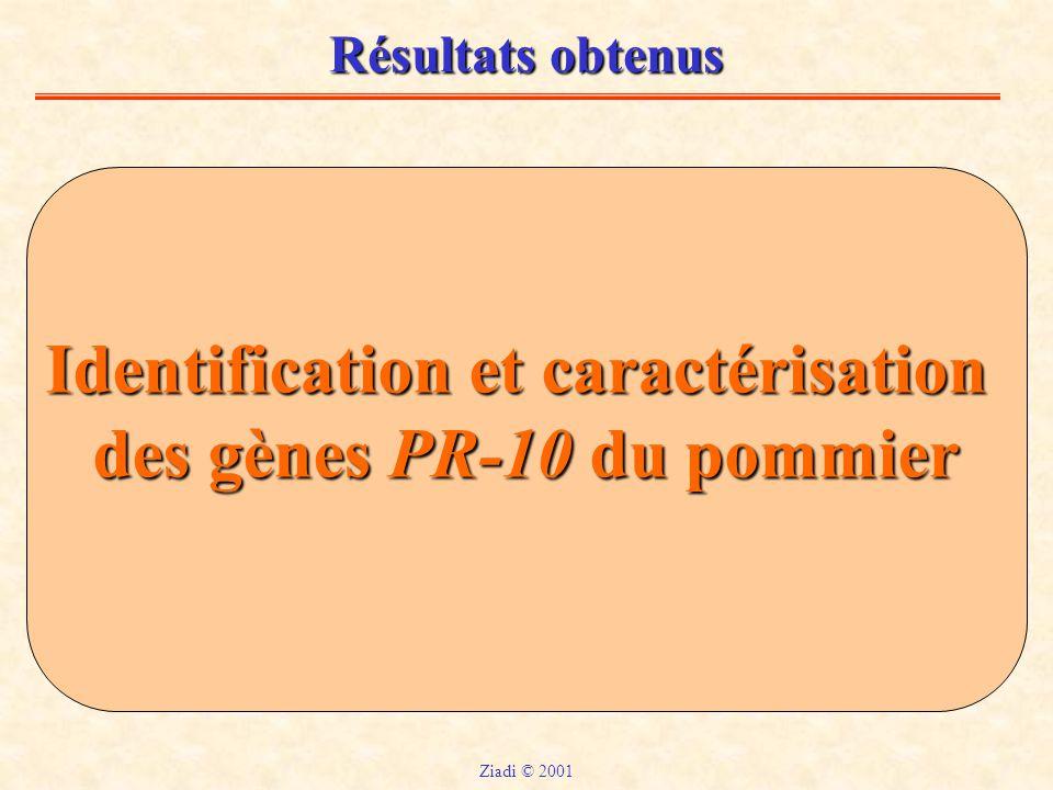 Identification et caractérisation des gènes PR-10 du pommier