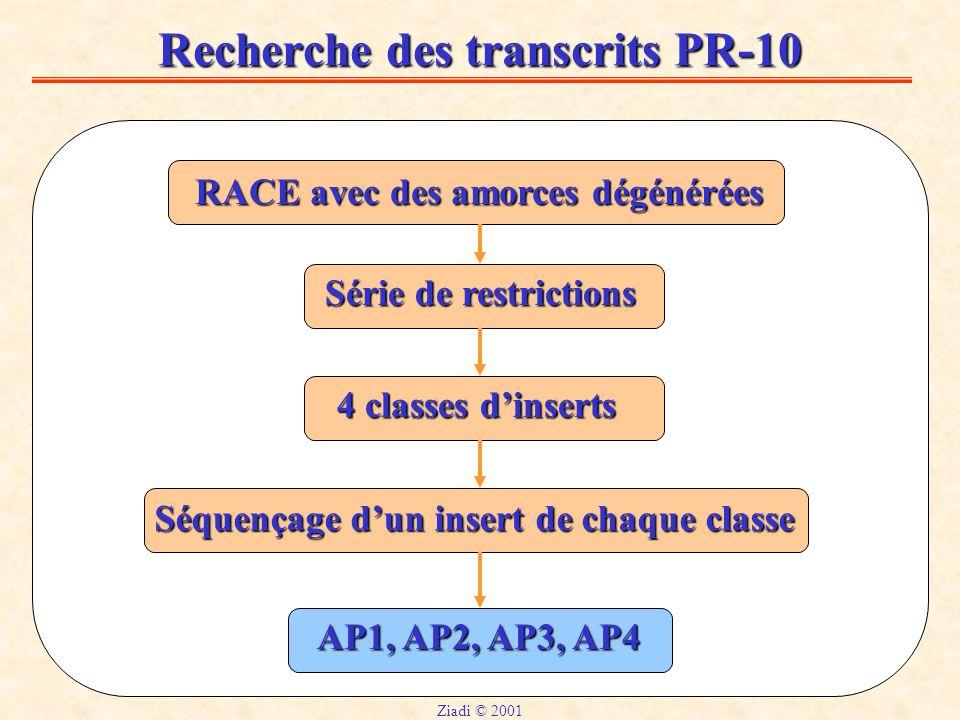 Recherche des transcrits PR-10