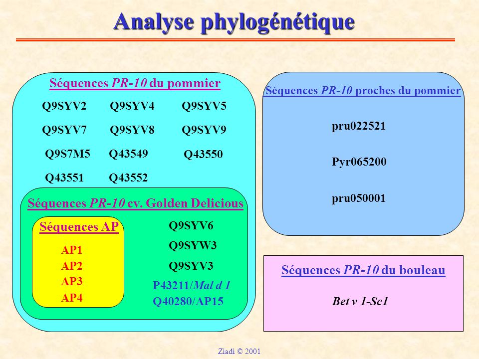 Analyse phylogénétique