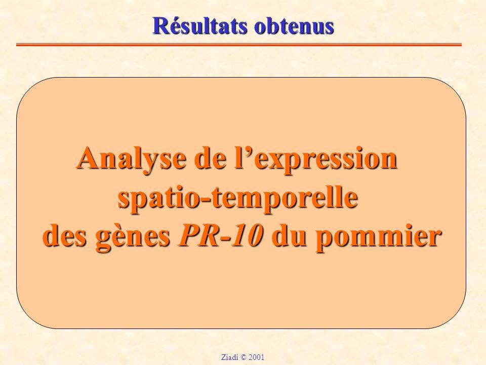 Analyse de l'expression des gènes PR-10 du pommier
