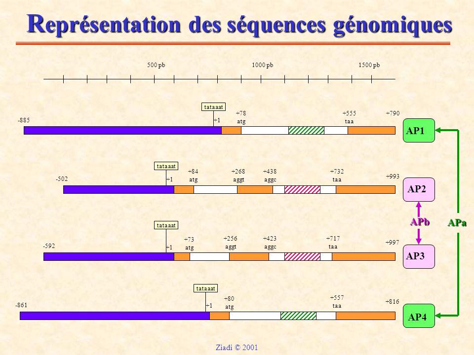 Représentation des séquences génomiques